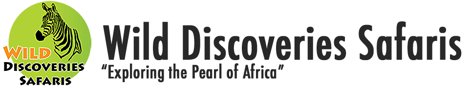 Wild Discoveries Uganda Safaris