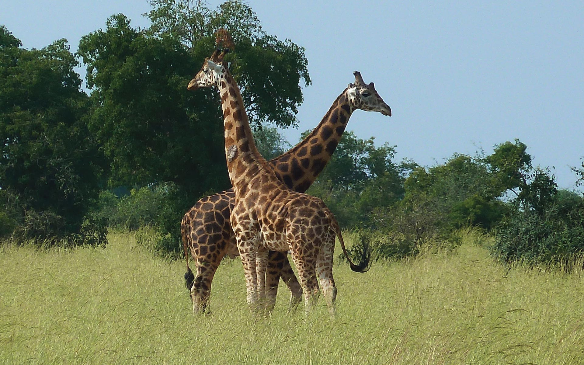 Kidepo Valley shines in the savannah