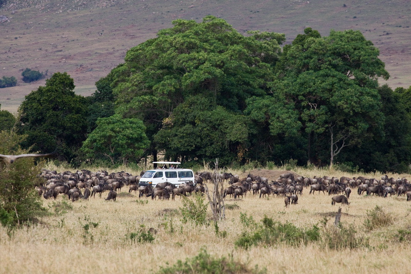 3 day super-budget safari in the Maasai Mara, Kenya