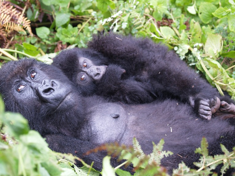 Gorilla Trekking - The most epic experience