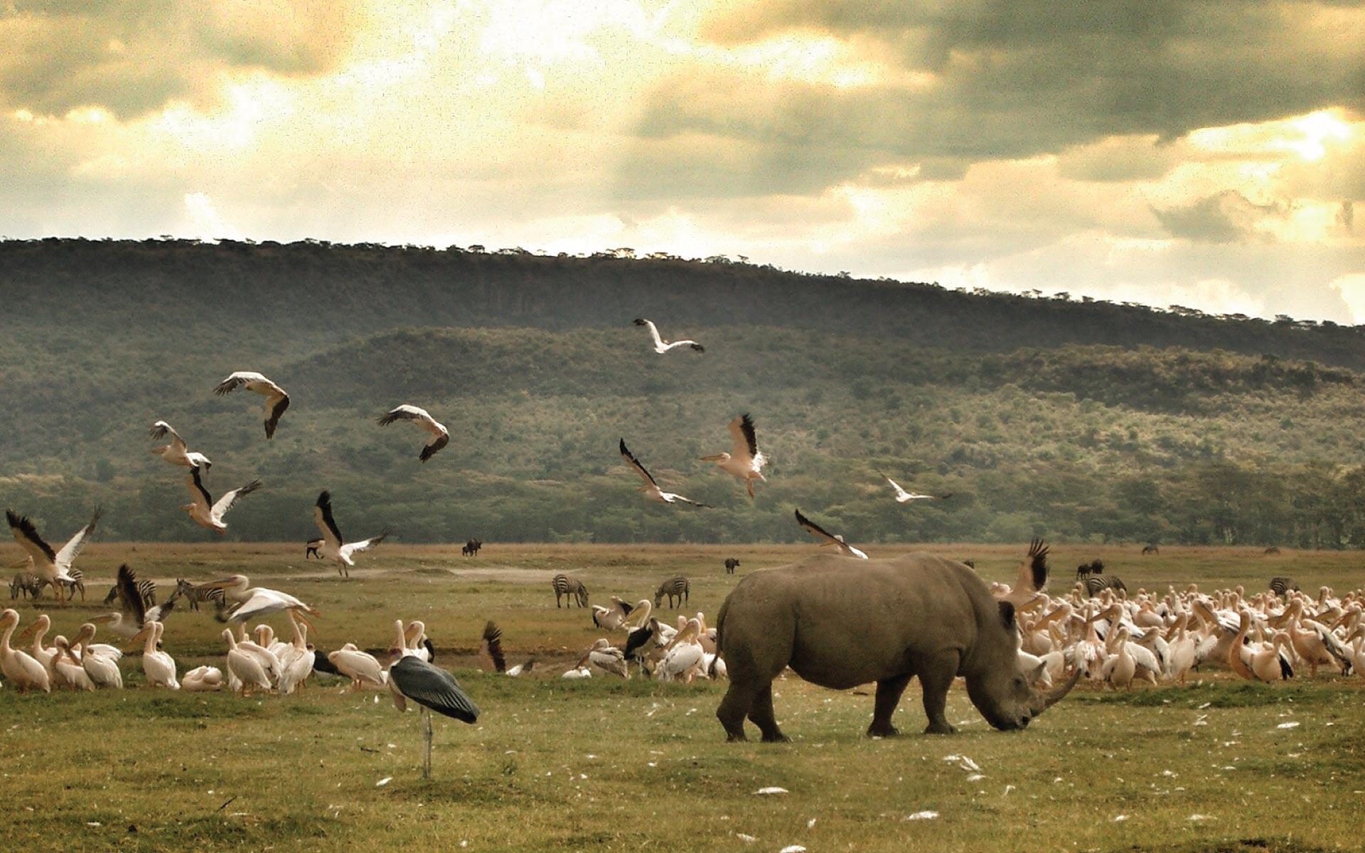 Lake Nakuru, A Wildlife Paradise