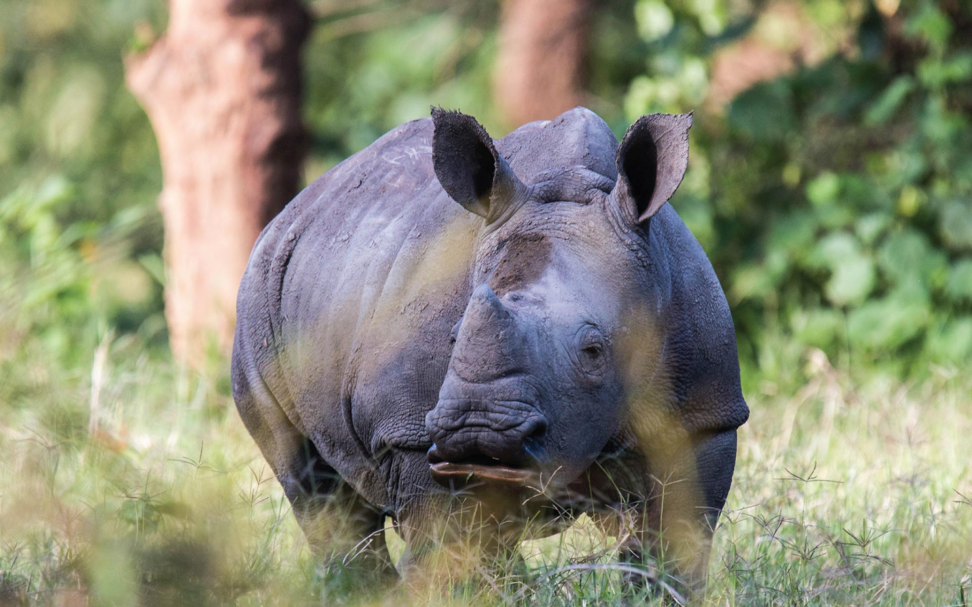Ziwa Rhino Sancturay, Big 5 Uganda, big Five, Safari