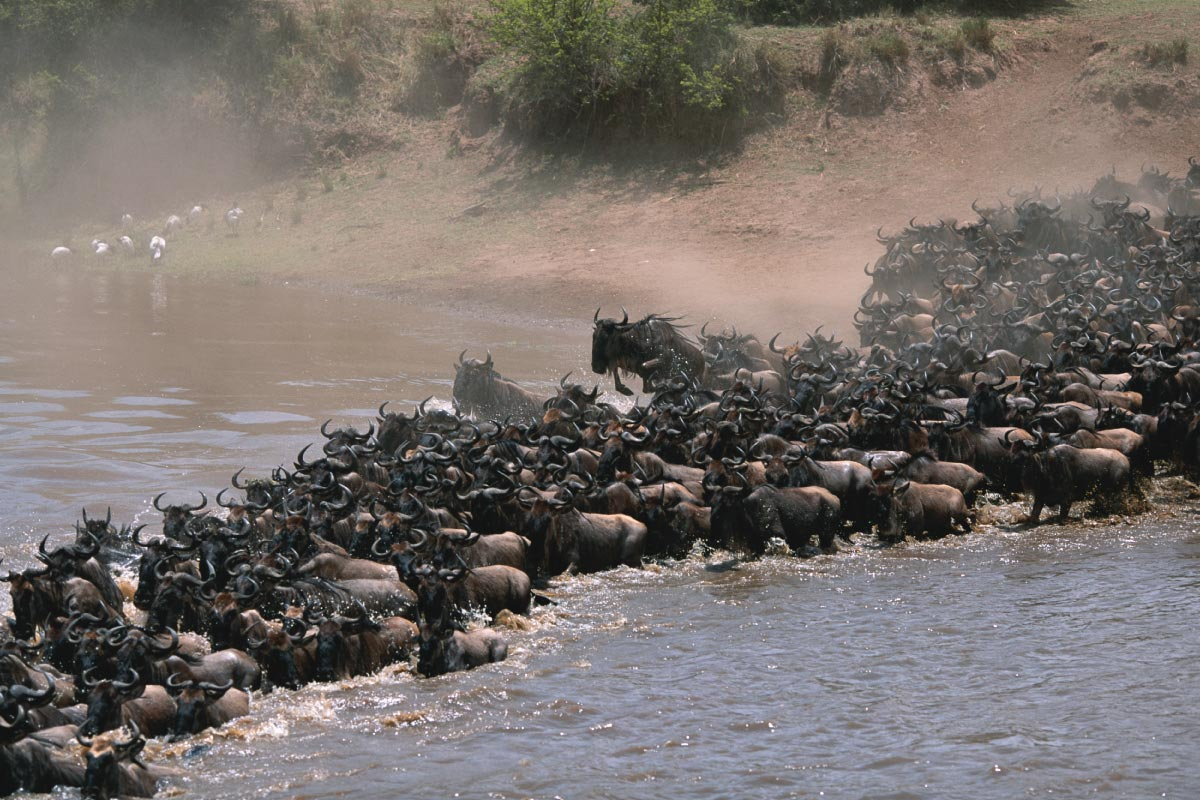 Masai Mara Wildebeest Migration Safari