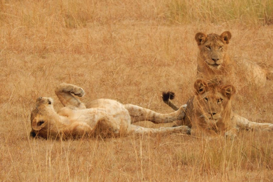 queen elizabeth national park - off the beaten track safari