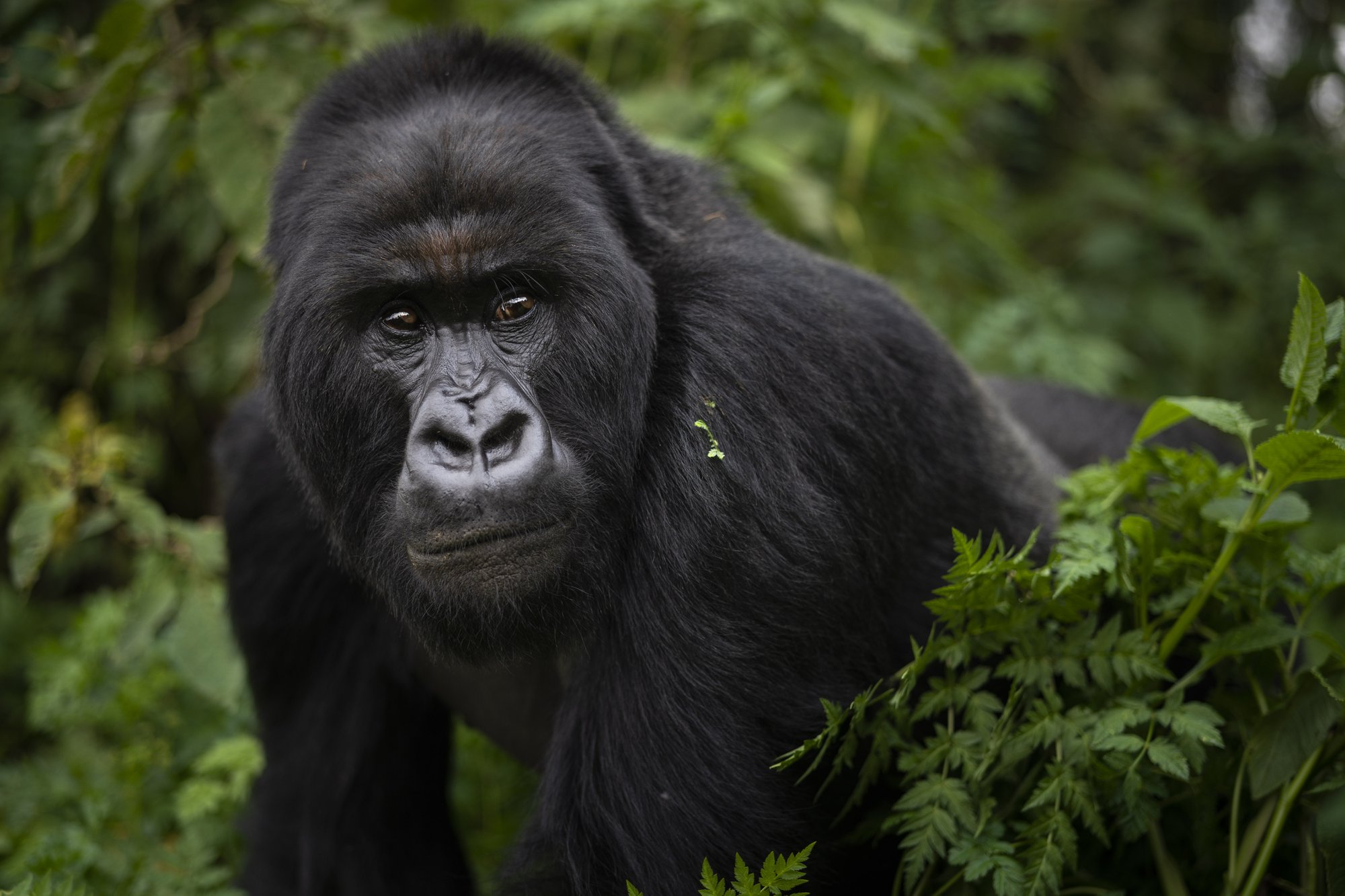 5 Days fly-in safari and Gorilla Trekking.
